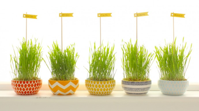 wheatgrass dinner party name holders