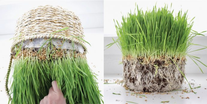How to grow Easter Grass and Wheatgrass in a Basket on MADE Everyday with Dana Willard